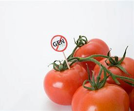 Toxins in GMO Foods