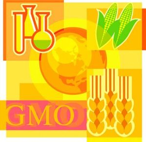 GMO Foods For Pregnant Women