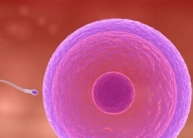 Female Fertility Symptoms