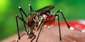zika virus an alert signal for pregnant women